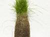 The Shape of Grass (water bottle)