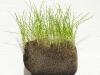 The Shape of Grass (tea pot)
