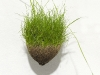 The Shape of Grass (wine glass)