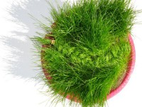 The Shape of Grass (Braid)